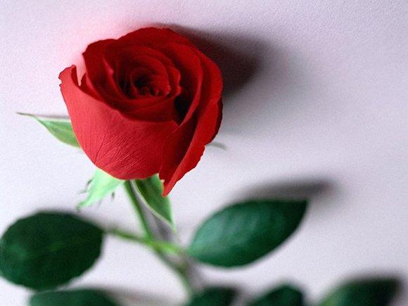 Короткие поздравления с днем свадьбы красивые в стихах короткие смс красивые